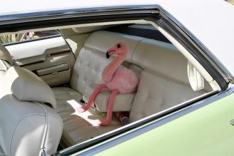 condo car show bird